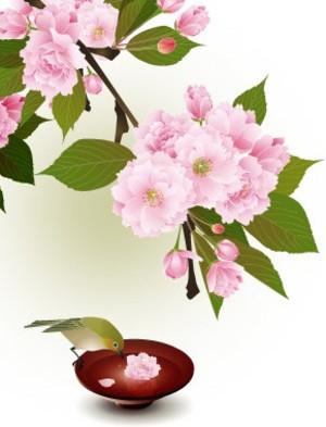 Mejiroyaesakura2